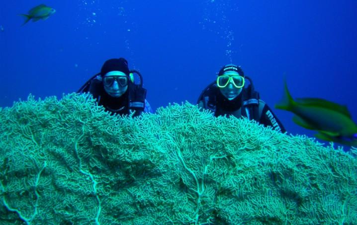Immersione a Sharm El Shake