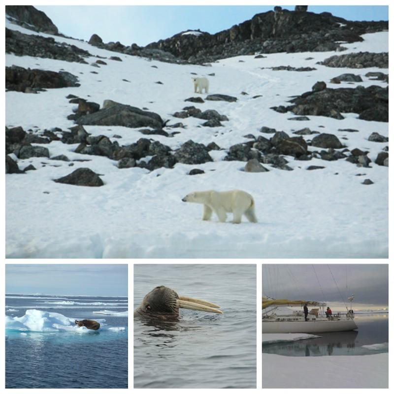 Avvistamento animali alle Svalbard