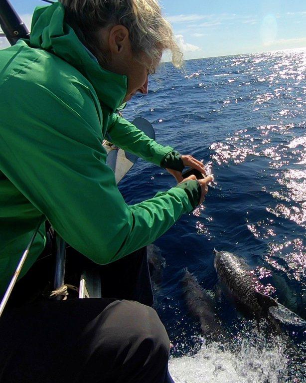 Avvistamento delfini dalla barca a vela